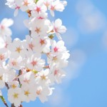 春先の白ニキビに注意!暖かい季節はコメドができやすい